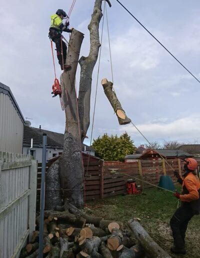 tree surgeon inverness